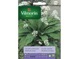 Medvědí česnek - Allium ursinum