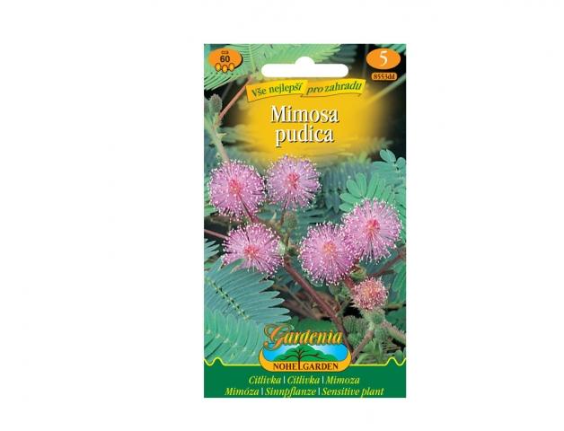 Mimosa Pudica - Citlivka