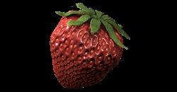 ATAMI ATA Organics Flower-C 1L