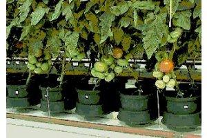 Autopot Easy2grow Kit se 48 květináči, bez Flexitank
